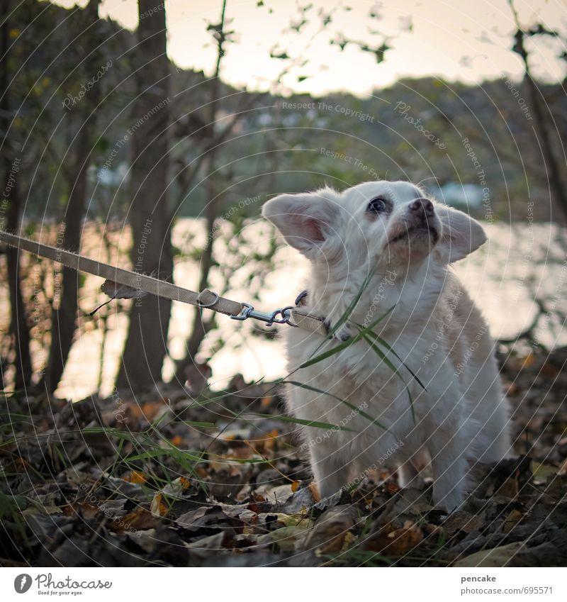 sportlich | ohne mich! Natur Landschaft Frühling Baum Blatt Flussufer Rhein Haustier Hund 1 Tier Zeichen alt Willensstärke Stress Frustration Streik ziehen