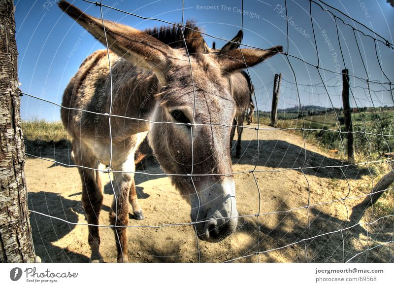 Du Esel Natur Himmel Ferien & Urlaub & Reisen Tier Italien Zaun HDR Toskana Esel