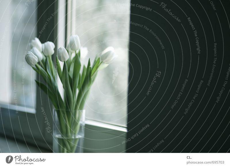 tulpen gehen immer weiß Blume Blatt Fenster Wand Blüte Mauer Wohnung Raum Häusliches Leben Dekoration & Verzierung trist Geburtstag Geschenk Blühend