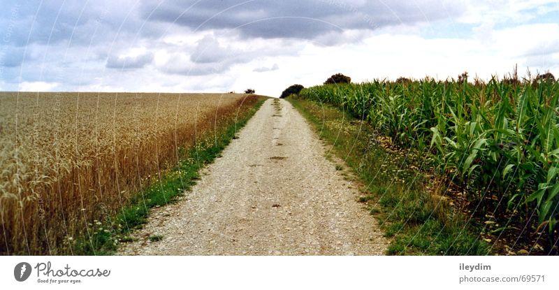 vier Wolken 4 elementar Feldfrüchte Fußweg Landweg Spuren auswärts Gras unterwegs Horizont Panorama (Aussicht) Getreide Wege & Pfade Mais Himmel frei Freiheit