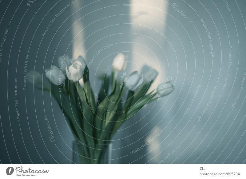 tulpen Häusliches Leben Wohnung Dekoration & Verzierung Raum Sonnenlicht Frühling Schönes Wetter Blume Tulpe Blatt Blüte Mauer Wand Blühend weiß Vergänglichkeit