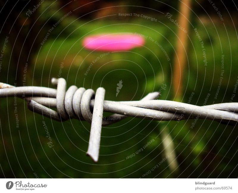 You Are Not Invited grün Sommer Garten Wärme rosa Physik Grenze Zaun Verbote Erfrischung Aufenthalt Stachel Stacheldraht unfreundlich Stacheldrahtzaun