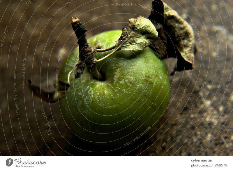 Fallobst Blatt Stengel Herbst grün braun getupft Frucht Apfel Stein Sommer
