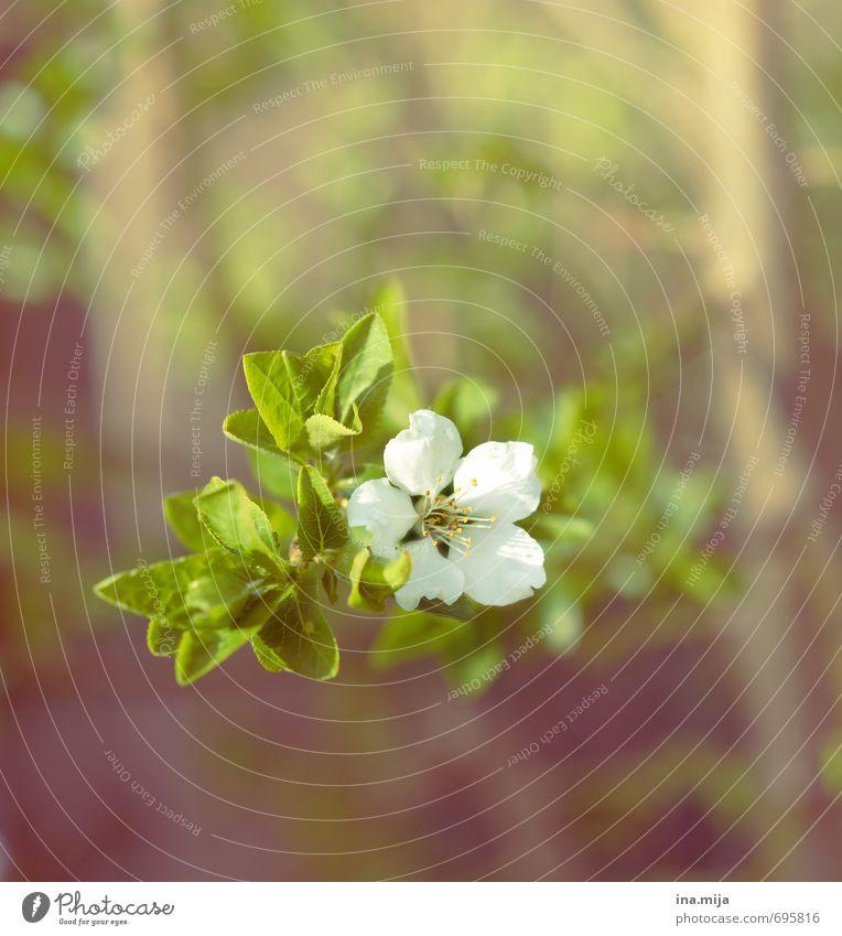 es frühlingt Umwelt Natur Pflanze Frühling Blume Blüte Nutzpflanze Wildpflanze Garten Blühend Schwarzdorn Lebewesen Beerensträucher Sträucher Pflanzenteile