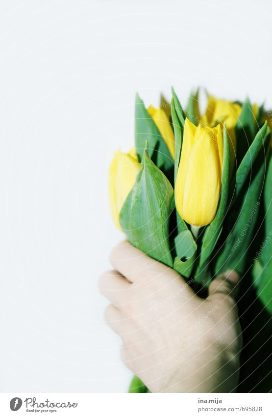Alles Gute! Natur schön grün Pflanze Hand Blume gelb Umwelt Frühling Dekoration & Verzierung Geburtstag frisch Romantik festhalten Blumenstrauß Wachsamkeit