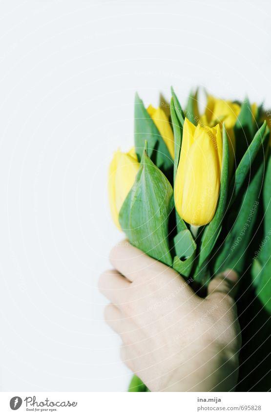 Alles Gute! Umwelt Natur Pflanze Frühling Tulpe schön gelb grün Blumenstrauß festhalten schenken geben Überraschung Romantik Valentinstag Geburtstagsgeschenk