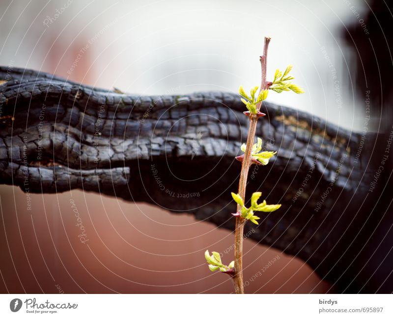 Hope Natur Frühling Sommer Pflanze Baum Trieb Ast Wachstum ästhetisch frisch Originalität Kraft Vertrauen Ausdauer Beginn Hoffnung Leben Lebensfreude Überleben