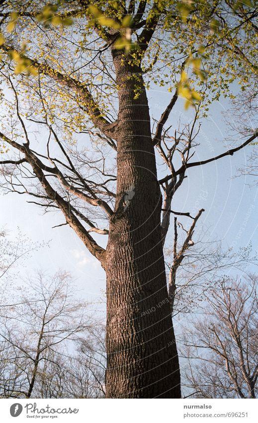 ansinnen Natur grün Baum Blatt Wald Umwelt Gefühle Frühling natürlich Gesundheit braun träumen Park Wachstum authentisch wandern