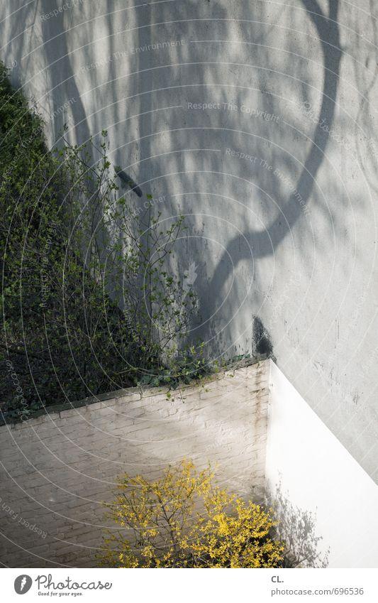hinterhof Umwelt Natur Frühling Schönes Wetter Pflanze Baum Sträucher Garten Mauer Wand Blühend trist gelb grau Stadt Hinterhof Farbfoto Außenaufnahme