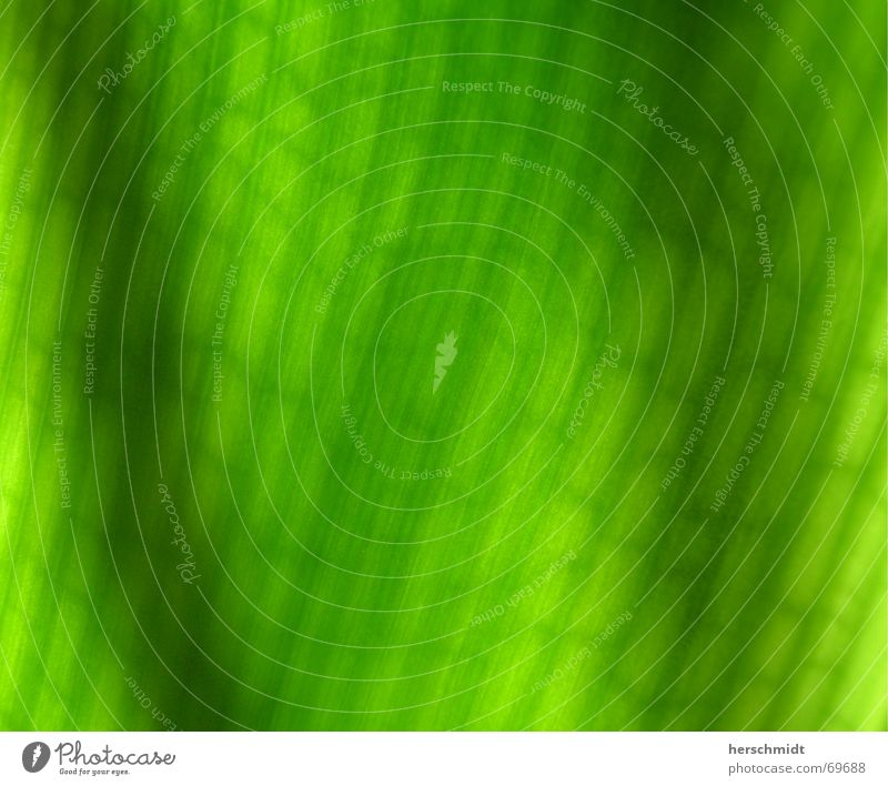 Zellstruktur grün Blatt hell Streifen Verbindung Konstruktion Anordnung Photosynthese Gefängniszelle Synthese