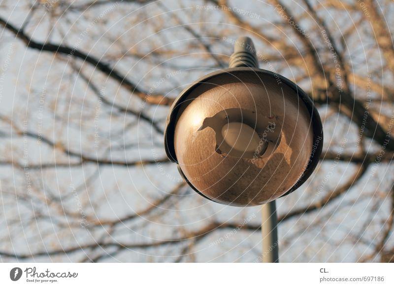 kaputt Umwelt Natur Himmel Baum Park alt Frustration Verfall Zerstörung Glühbirne Lampe Straßenbeleuchtung Scherbe Loch Farbfoto Außenaufnahme Menschenleer