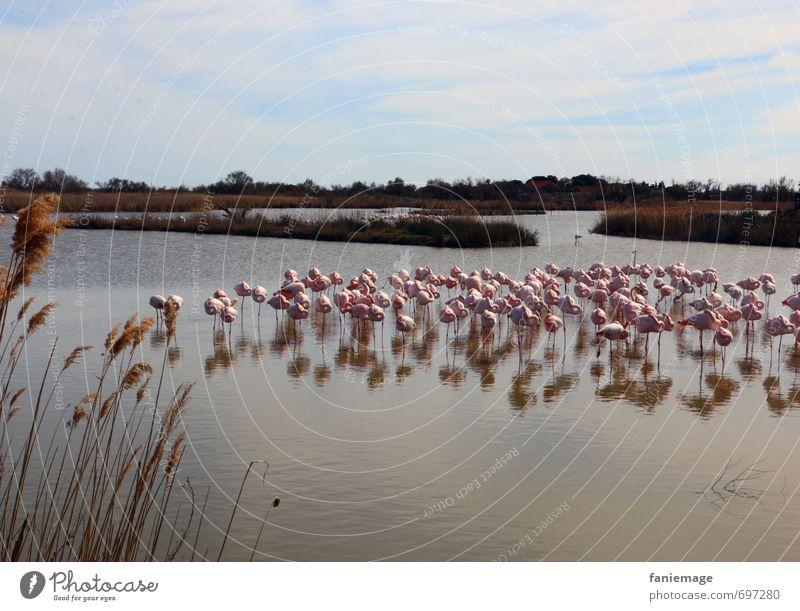 Siesta Natur Wasser Landschaft ruhig Tier Umwelt Frühling See rosa Vogel Zusammensein Idylle Wildtier schlafen Seeufer Schilfrohr