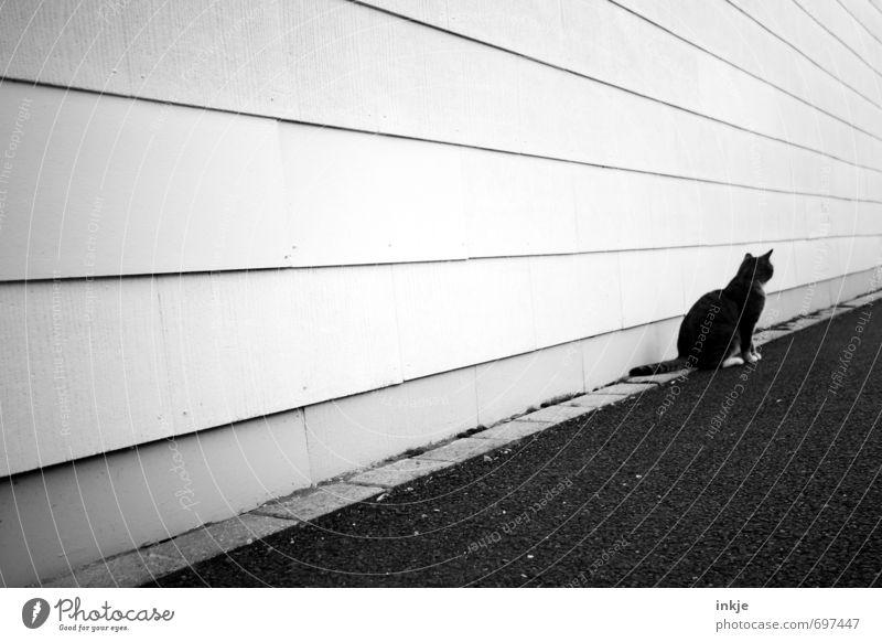 Einzelgängerin Gebäude Mauer Wand Fassade Straße Wege & Pfade Tier Haustier Katze 1 Linie Streifen hocken Blick warten trist Stadt schwarz weiß Gefühle Stimmung