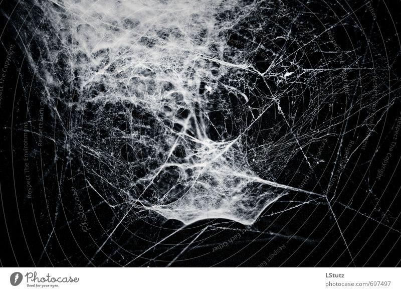 spiders web . 02 Natur Spinne ästhetisch bedrohlich dunkel gruselig blau grau schwarz weiß Angst Todesangst kalt Surrealismus Symmetrie Spinnennetz Farbfoto