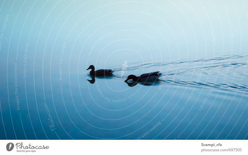 Doppelkopf Ente Wasser Wellen See dunkel kalt Gelassenheit geduldig ruhig Selbstbeherrschung Neugier Hoffnung Traurigkeit Sorge Trauer Sehnsucht Einsamkeit