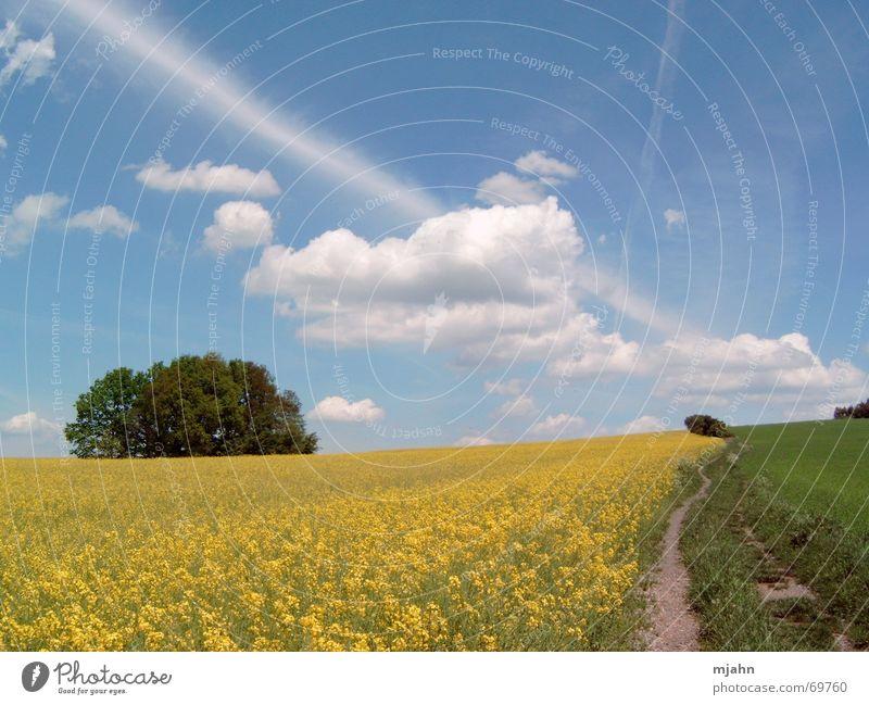 Frühlingstag am Maisfeld Baum Wolken Wiese Horizont Fußweg