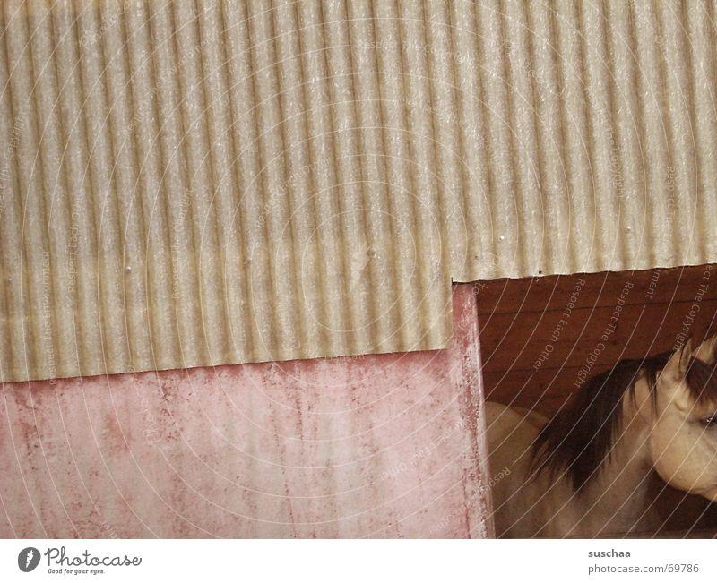 auf dem land ist's schön (1) Wand Pferd Aussicht Amerika Stall Wellblech Landleben