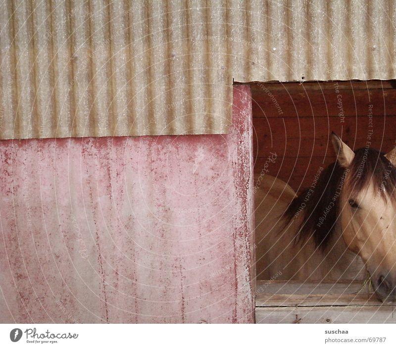 auf dem land ist's schön (2) Wand Fenster Pferd Aussicht Tier Stall Pferdekopf
