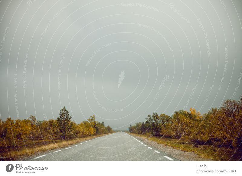 nordwärts Himmel Natur Landschaft Wolken kalt Straße Herbst Freiheit Horizont wild Sträucher Europa fahren Asphalt Autofahren schlechtes Wetter
