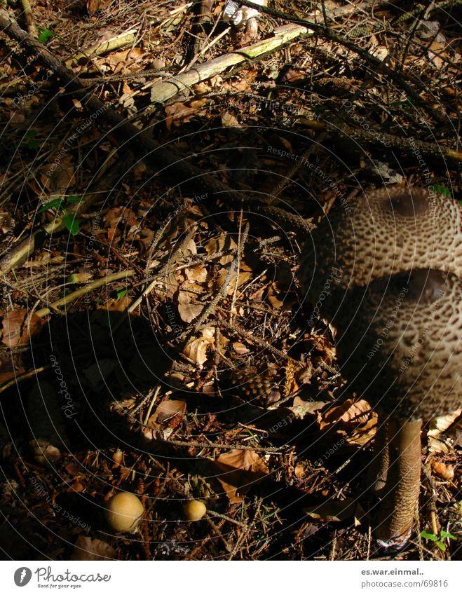 ich bleib bei dir. Pflanze Tier Wald Tod klein außergewöhnlich braun Paar Freundschaft groß Ast Spaziergang Lebewesen Zusammenhalt lecker Stengel