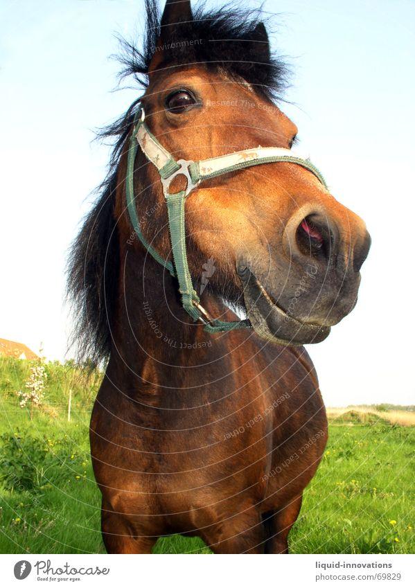 Pferdchen Himmel Auge Wiese Tier Mähne Halfter Glubschauge