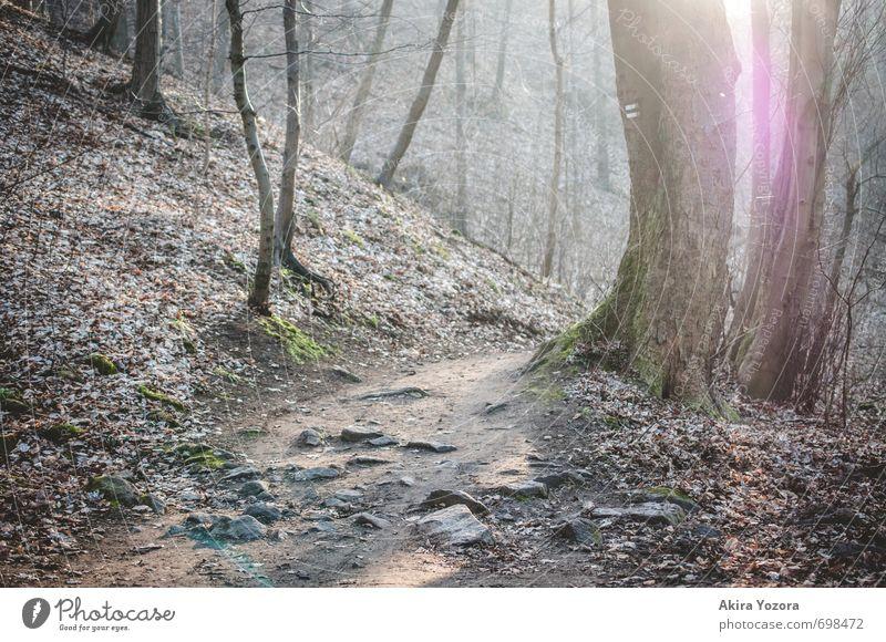 Let the sunshine in. Natur grün weiß Baum Erholung Einsamkeit Wald Gefühle natürlich grau braun hell rosa leuchten wandern Idylle