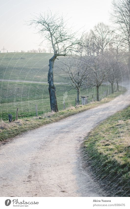 Es geht nicht immer nur geradeaus. Himmel Natur Ferien & Urlaub & Reisen blau grün Baum Einsamkeit Erholung Landschaft Umwelt Wiese Wege & Pfade Frühling Gras