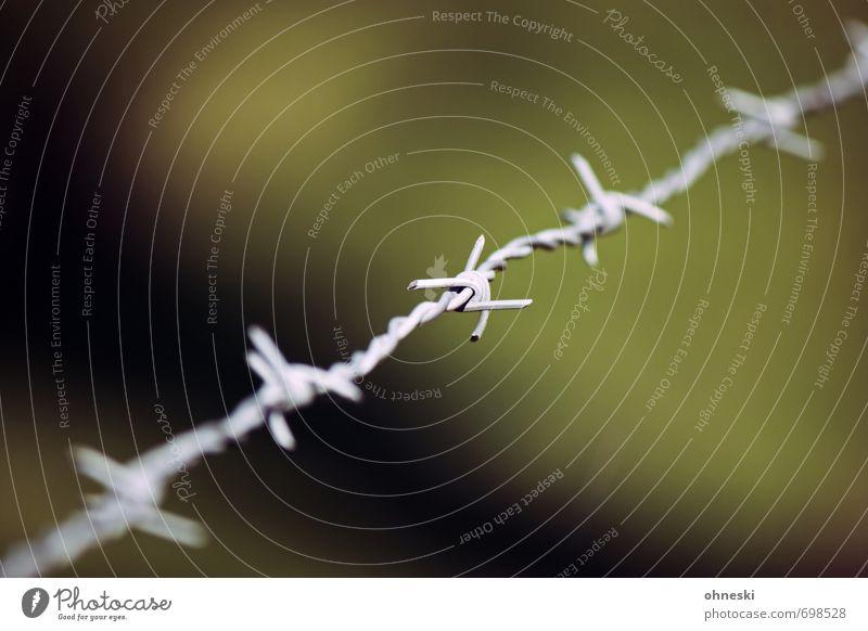 The Wire Draht Stacheldraht Zaun Knoten grün Verbote Grenze Farbfoto Außenaufnahme Menschenleer Textfreiraum oben Textfreiraum unten Tag Schwache Tiefenschärfe