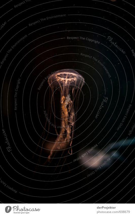 Formschöne Designerlampe *Qualle* Natur Urelemente Klima Klimawandel Nordsee Ostsee Meer Tier 1 ästhetisch sportlich authentisch außergewöhnlich bedrohlich