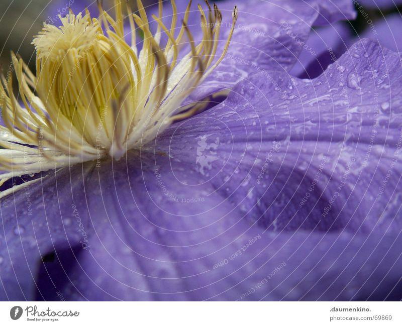 Erquickung Blume Blüte Pflanze Wassertropfen nass Blütenknospen Kontrast