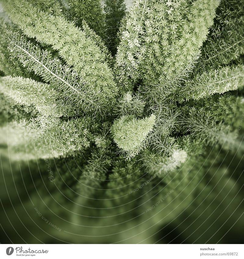 in nachbars garten .. grün Pflanze dunkel Zweig Grünpflanze Echte Farne