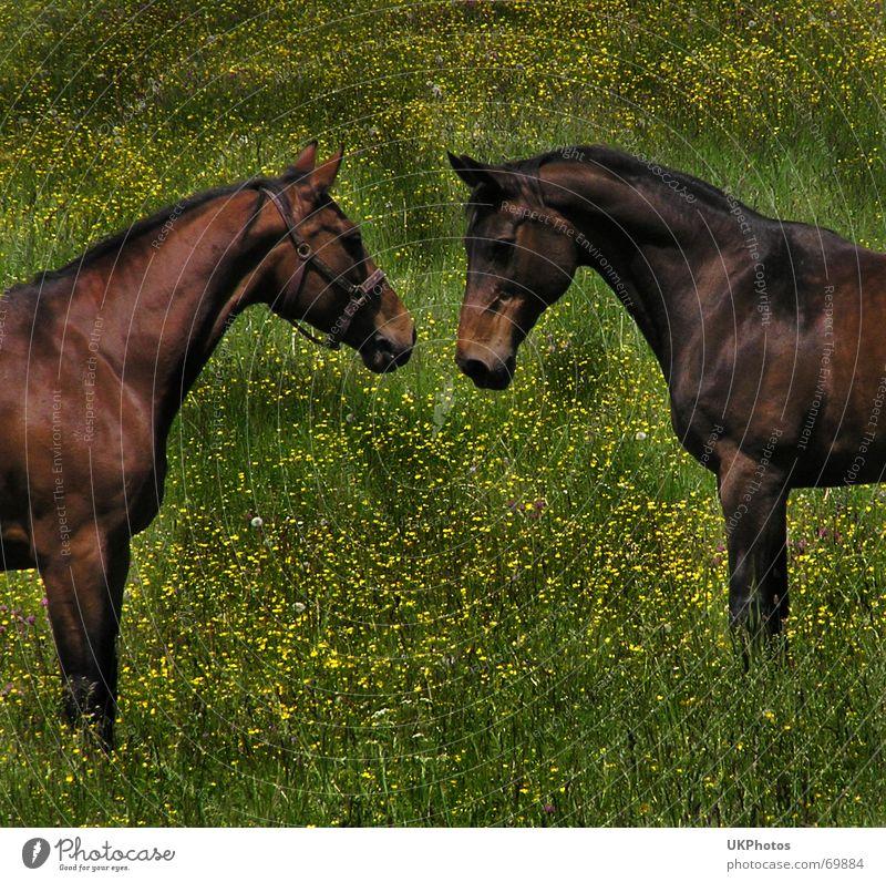 Pferdegeflüster harmonisch Tier Freundschaft Weide Wiese Liebe Natur