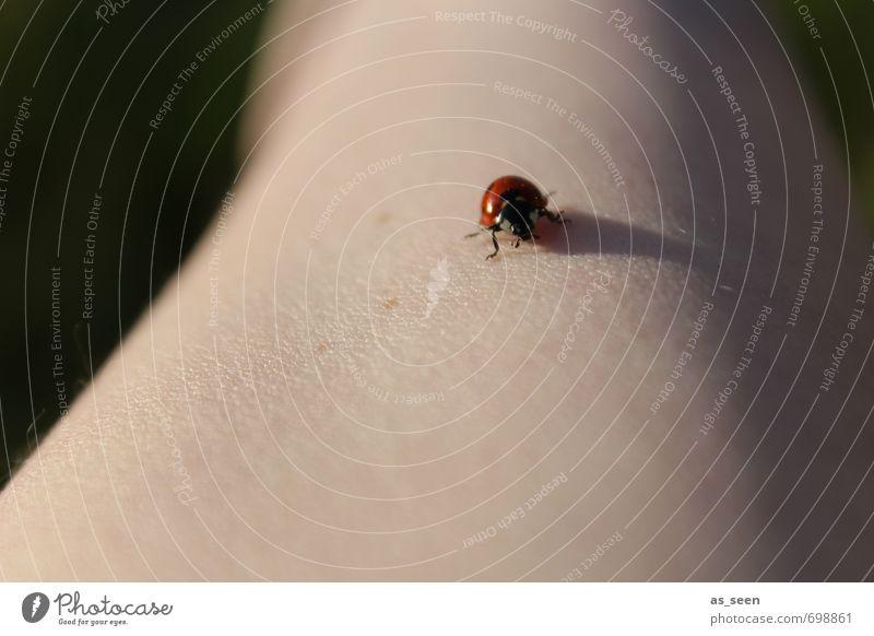 It´s a long way Arme Umwelt Natur Frühling Sommer Schönes Wetter Garten Tier Käfer 1 Zeichen berühren krabbeln authentisch Freundlichkeit Fröhlichkeit Glück
