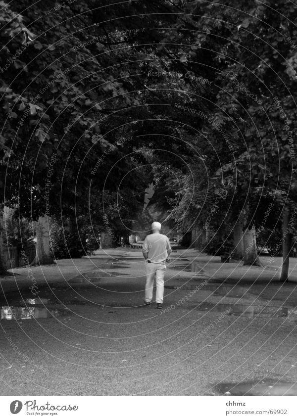 Geradeaus Park Mann gehen Spaziergang Allee Pfütze Baum Rücken Regen Mensch gerde Ziel Wege & Pfade Perspektive