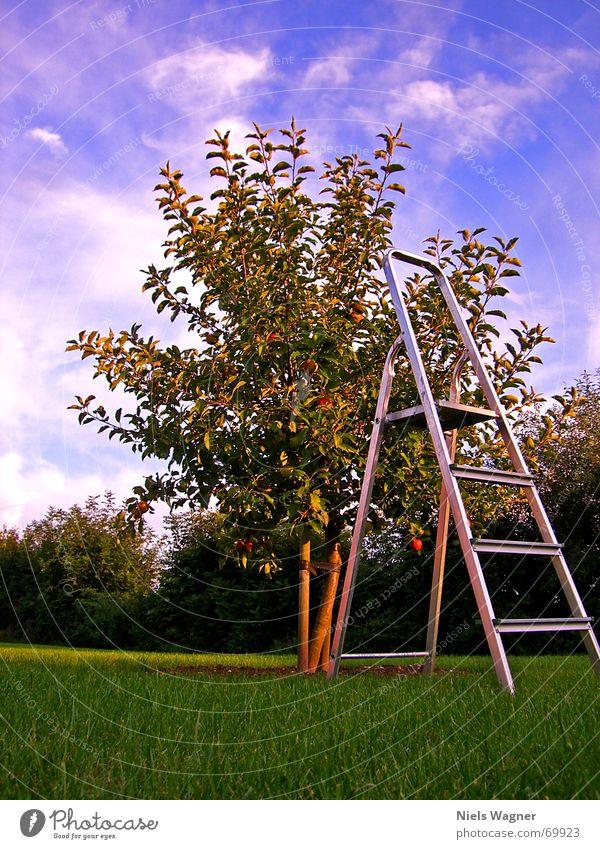 Die Früchte der Arbeit Himmel Baum Wolken Ernährung Arbeit & Erwerbstätigkeit Holz Rasen Apfel Ernte Baumstamm Leiter Aluminium Fußtritt