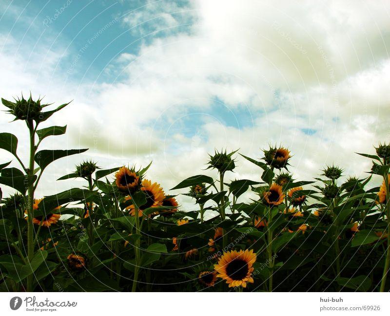 familienfreude Himmel Natur Pflanze grün Sommer Sonne Blume Wolken Freude Umwelt gelb Leben Blüte Herbst Frühling fliegen