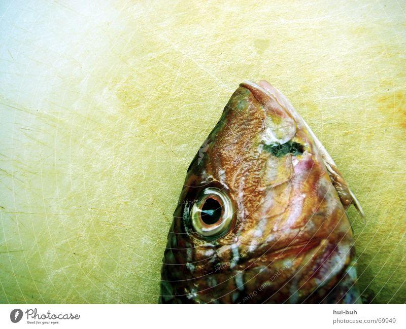 fischkopp Futter gefangen Meer See atmen bewegungslos rot glänzend fischig schleimig Fischer Ernährung fish Auge eye Tod dead Holzbrett kiehmen blau Mund Gebiss