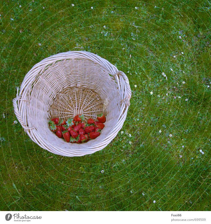 erlesene Früchte grün rot Blume Frühling Gras Glück Gesundheit Frucht frisch Bioprodukte saftig Diät Korb Erdbeeren Vegetarische Ernährung geflochten