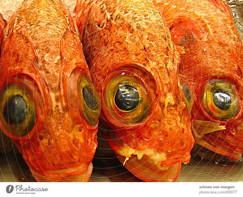 Aufmerksame Augen Meeresfrüchte Fischmarkt Baskenland Bilbao Blick Spanien Glätte frisch stumm Wachsamkeit Ferien & Urlaub & Reisen Europa Küste Wasserfahrzeug