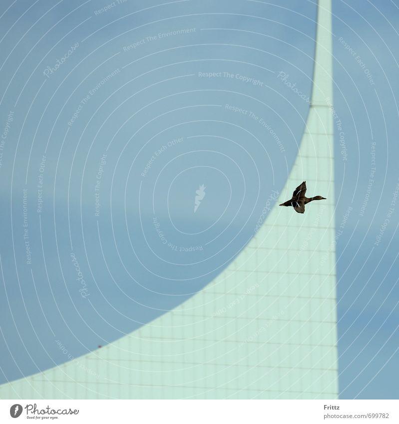 Logo Natur Himmel Gebäude Architektur Tier Wildtier Vogel Flügel Ente 1 fliegen oben blau braun weiß Ente im Flug Farbfoto Außenaufnahme Textfreiraum links