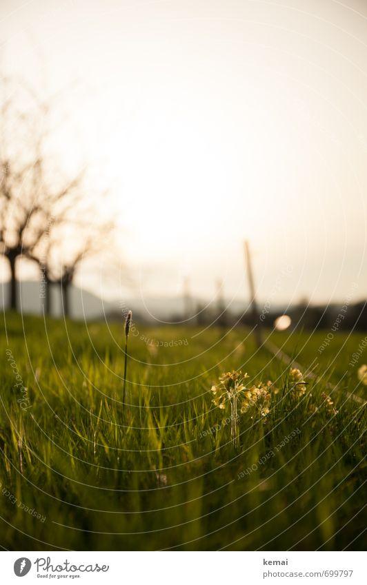 Sommertagabend Umwelt Natur Landschaft Pflanze Himmel Sonnenaufgang Sonnenuntergang Sonnenlicht Schönes Wetter Baum Blume Gras Wiese grün ruhig sommerlich