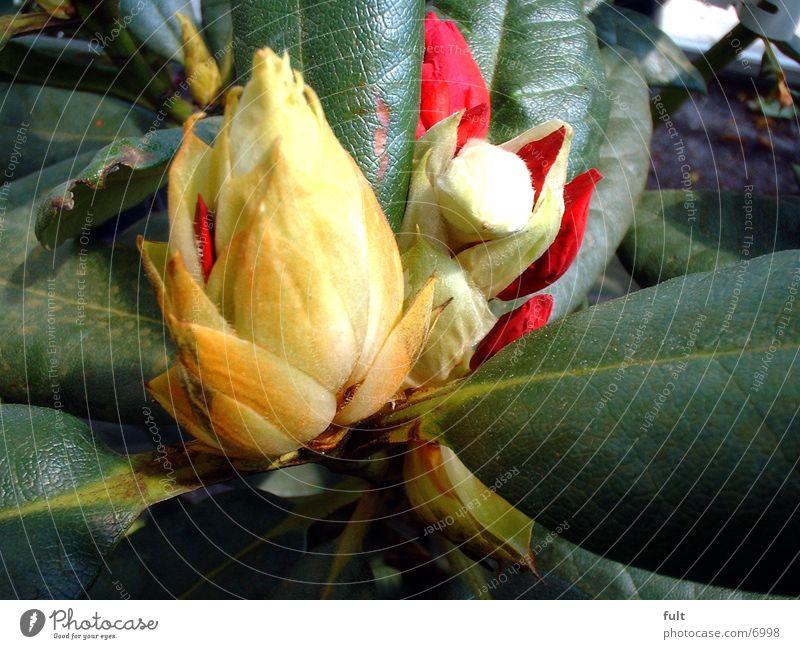 Blüte Pflanze frisch Fröhlichkeit