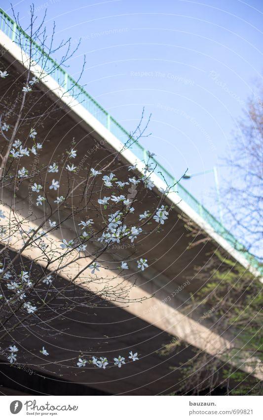 ut köln | blumen vor brücke. Umwelt Himmel Wolkenloser Himmel Frühling Schönes Wetter Pflanze Baum Blüte Park Stadt Brücke Straße Hochstraße Blühend schön blau