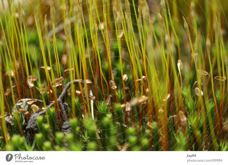 Mooswald Natur Wiese Kräuter & Gewürze
