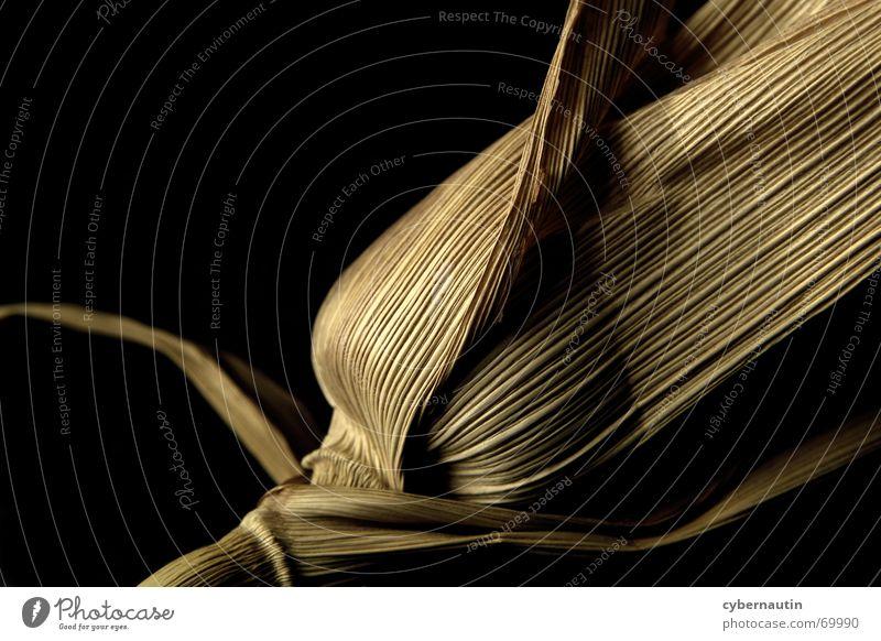 Maiskolben Herbst Popkorn mailskolben Stengel Getreide Ernte Ernährung