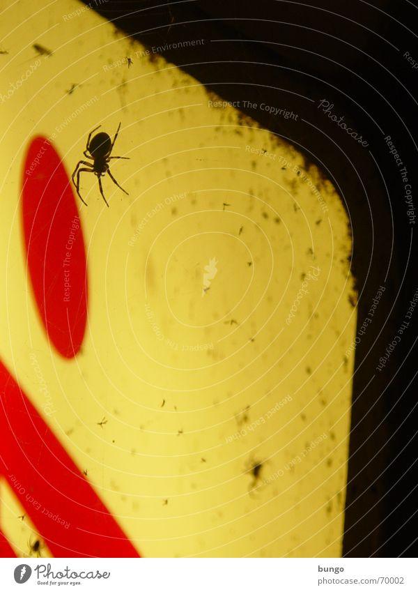aranea antelucana aegritudinem et solicitudinem fert rot Beine Angst dreckig fliegen Werbung Ekel Panik Spinne Neonlicht Spinnennetz Stechmücke Leuchtreklame Neonlampe