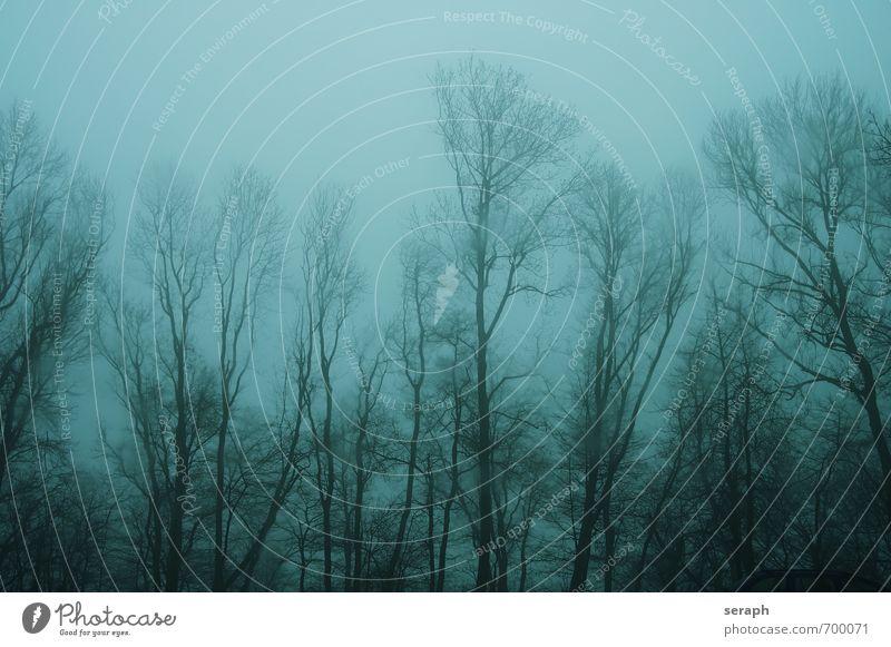 Zauberwald Baum Einsamkeit Wolken dunkel Wald Traurigkeit Angst Regen Nebel trist Wind Ast geheimnisvoll Baumstamm Zweig Unwetter