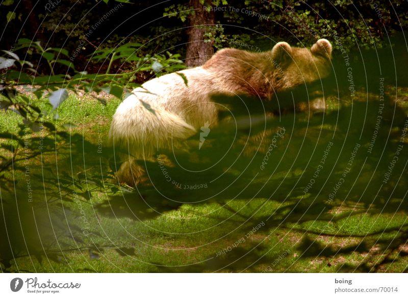 Tierterror - Bruno war nur der Anfang Spitze Versteck Bär Braunbär Jagd Wald Rückzug Wetter gefährlich Teddybär Streichelzoo Zirkus verborgen Nationalpark Natur