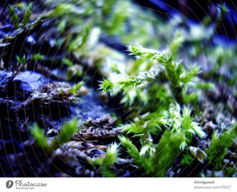 Im Moos Nix Los Natur grün Pflanze Wald Leben Garten klein Wachstum weich zart feucht sanft Schicksal Norden dezent Waldboden