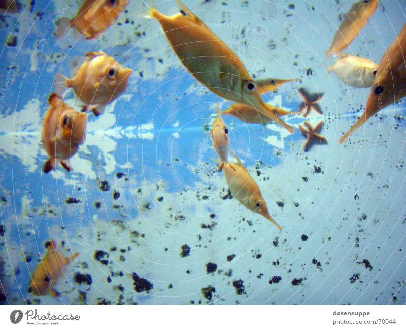Fishpond Flush blau Wasser Meer ruhig Auge Hintergrundbild Schwimmen & Baden See gold nass Fisch Klarheit tauchen durchsichtig unten Teich